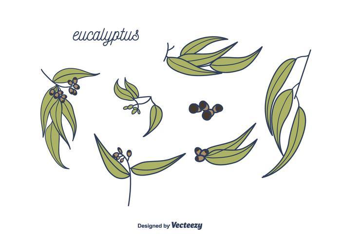 700x490 Eucalyptus Vector