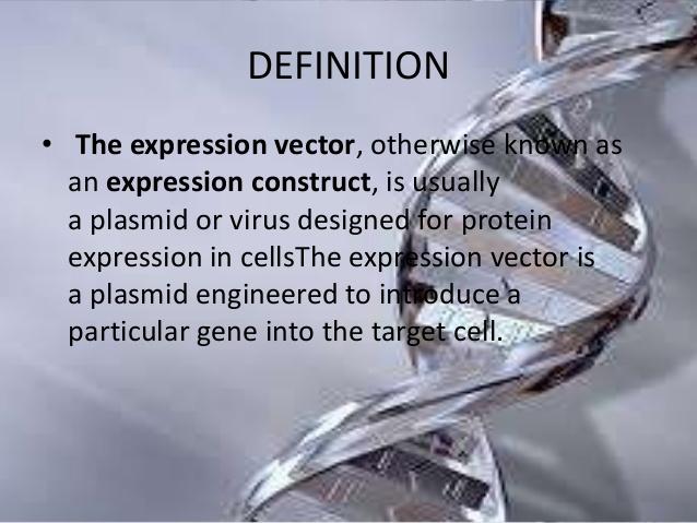 638x479 Expression Vectors