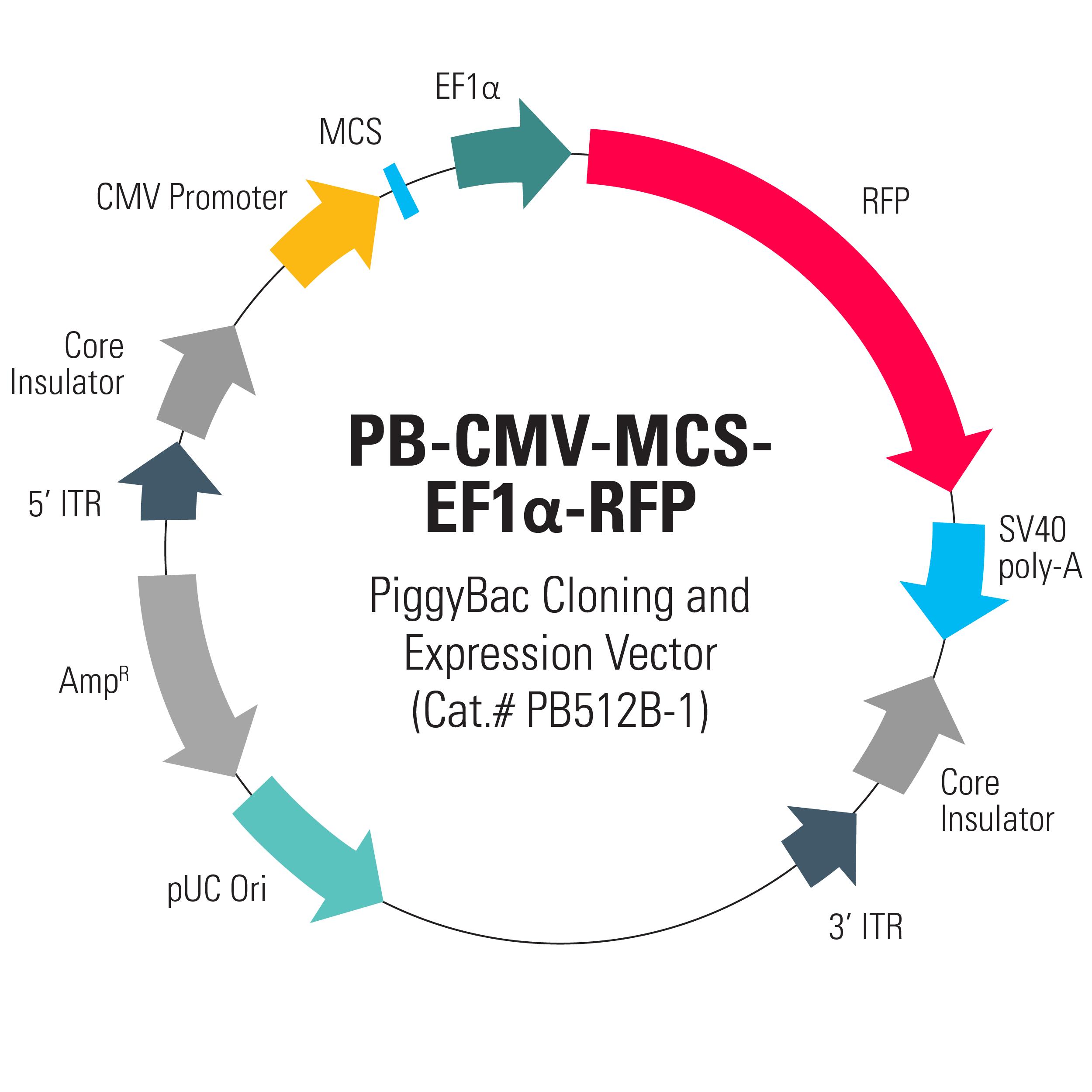 2500x2500 Pb Cmv Mcs Rfp Cdna Cloning And Expression Vector System