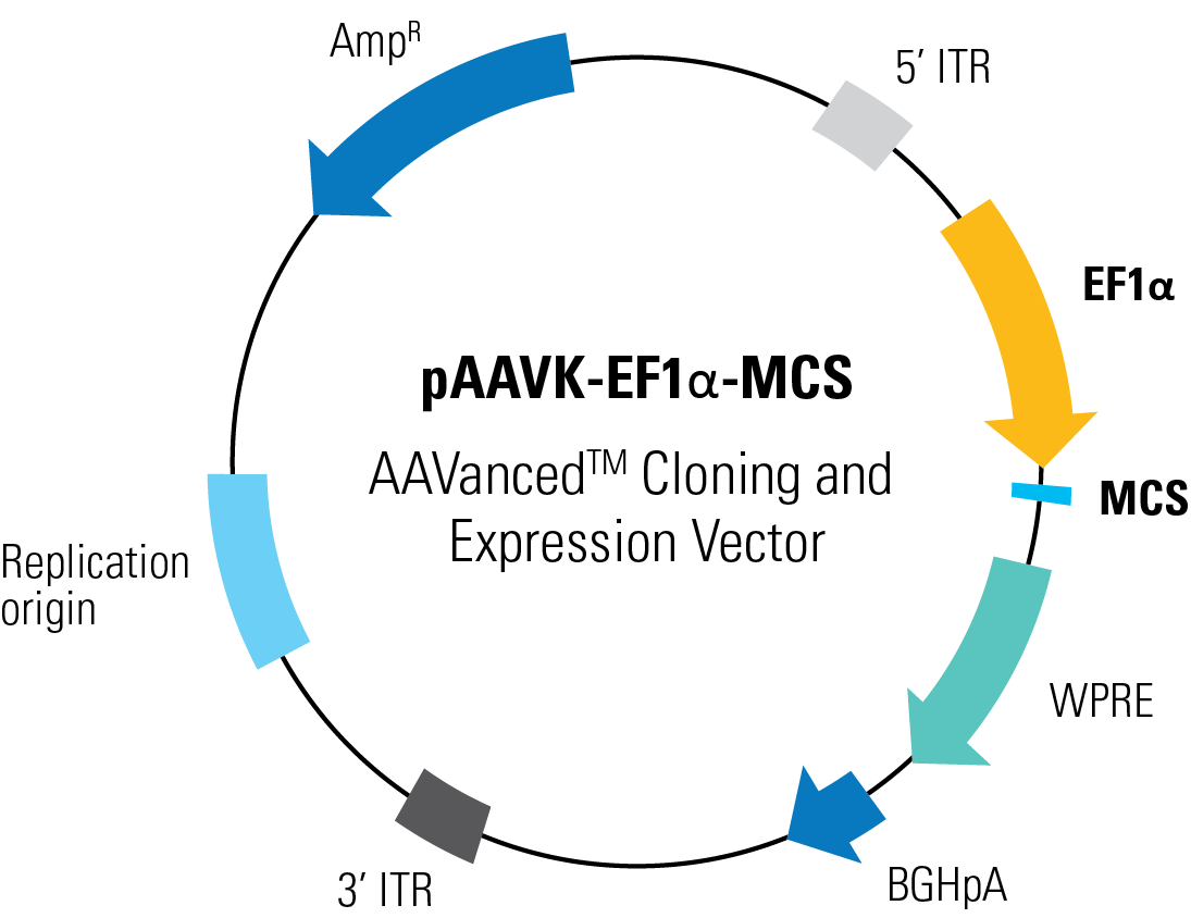 1095x844 Paavk Mcs Aavanced Cloning And Expression Vector