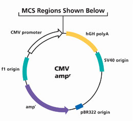 260x238 Cmv Vectors For High Level Mammalian Transient Expression Sigma