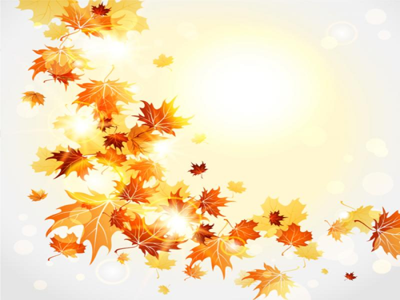 800x600 Cartoon Fall Leaves Bright Autumn Leaves Vector Download