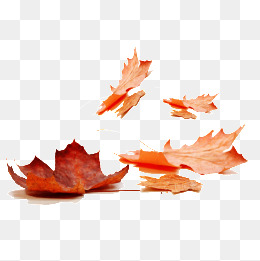 260x261 Fall Leaves Png Images Vectors And Psd Files Free Download On