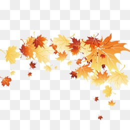 260x260 Fall Leaves Png, Vectors, Psd, And Clipart For Free Download Pngtree
