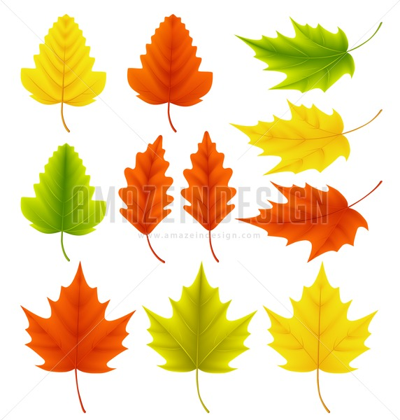 572x600 Fall Leaves Vector Collection. Set Of Autumn Leaves
