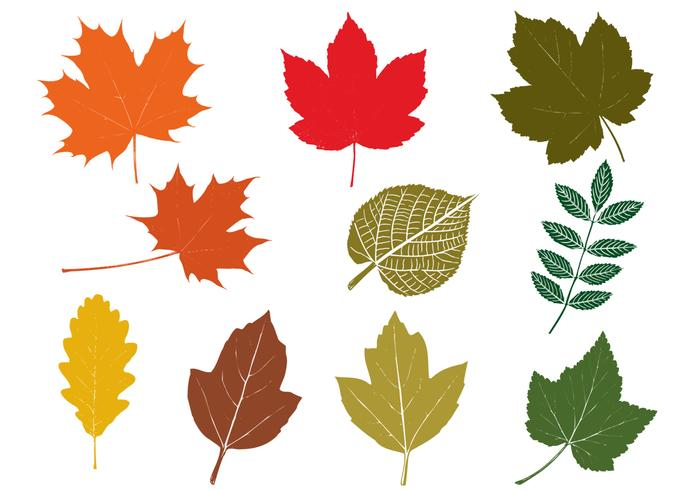 700x490 Fall Leaves Vector Pack