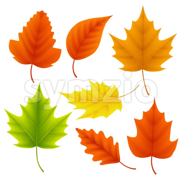 620x620 Fall Leaves Vector Set For Autumn Season And Elements Vector