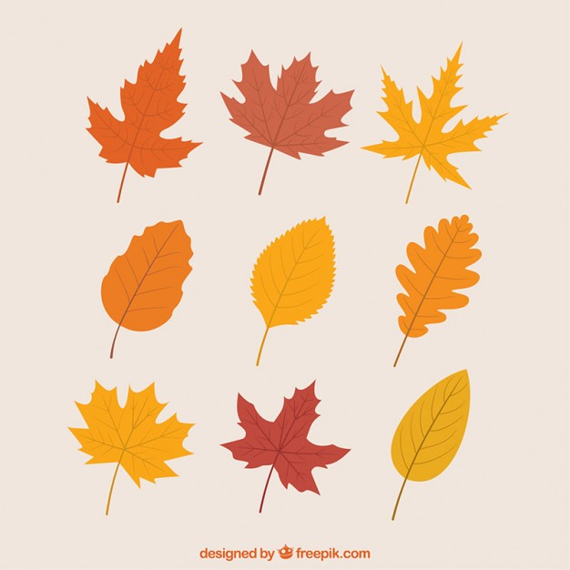 626x626 Fall Vectors, Photos And Psd Files Free Download