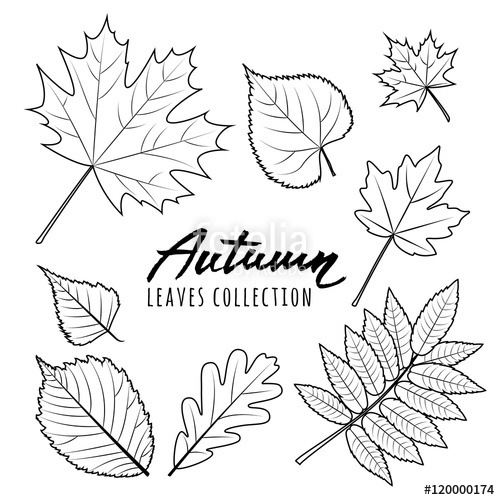 500x500 Set Of Vector Autumn Leaves. Black And White Outline Hand Drawn
