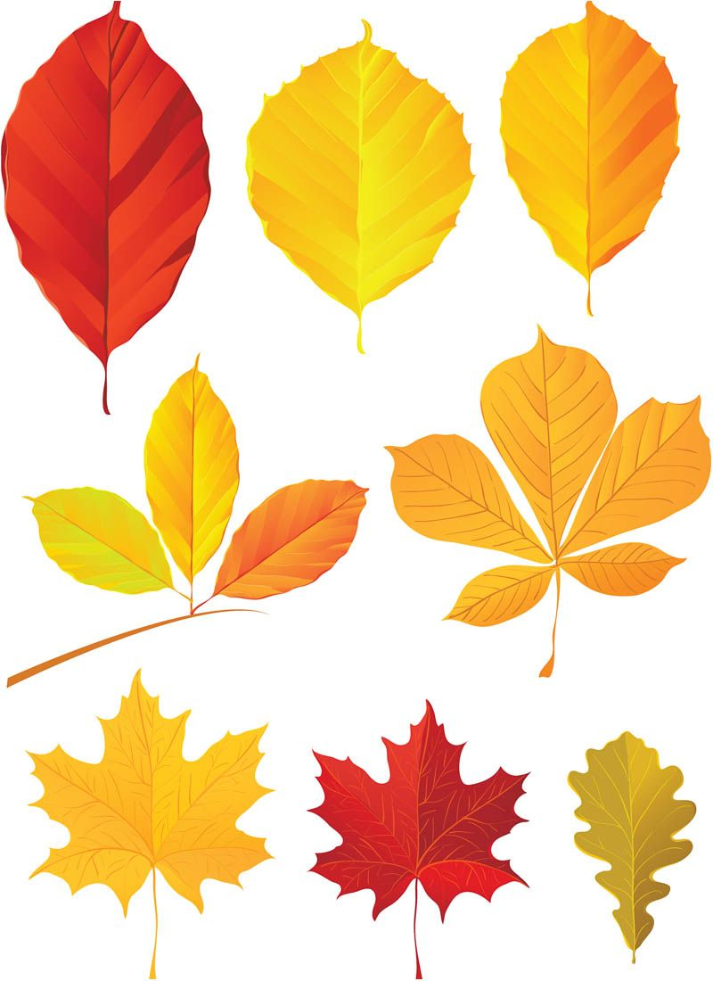 800x1100 Fall Leaves, Autumn Leaf Shapes, Variety Of Colors Fall