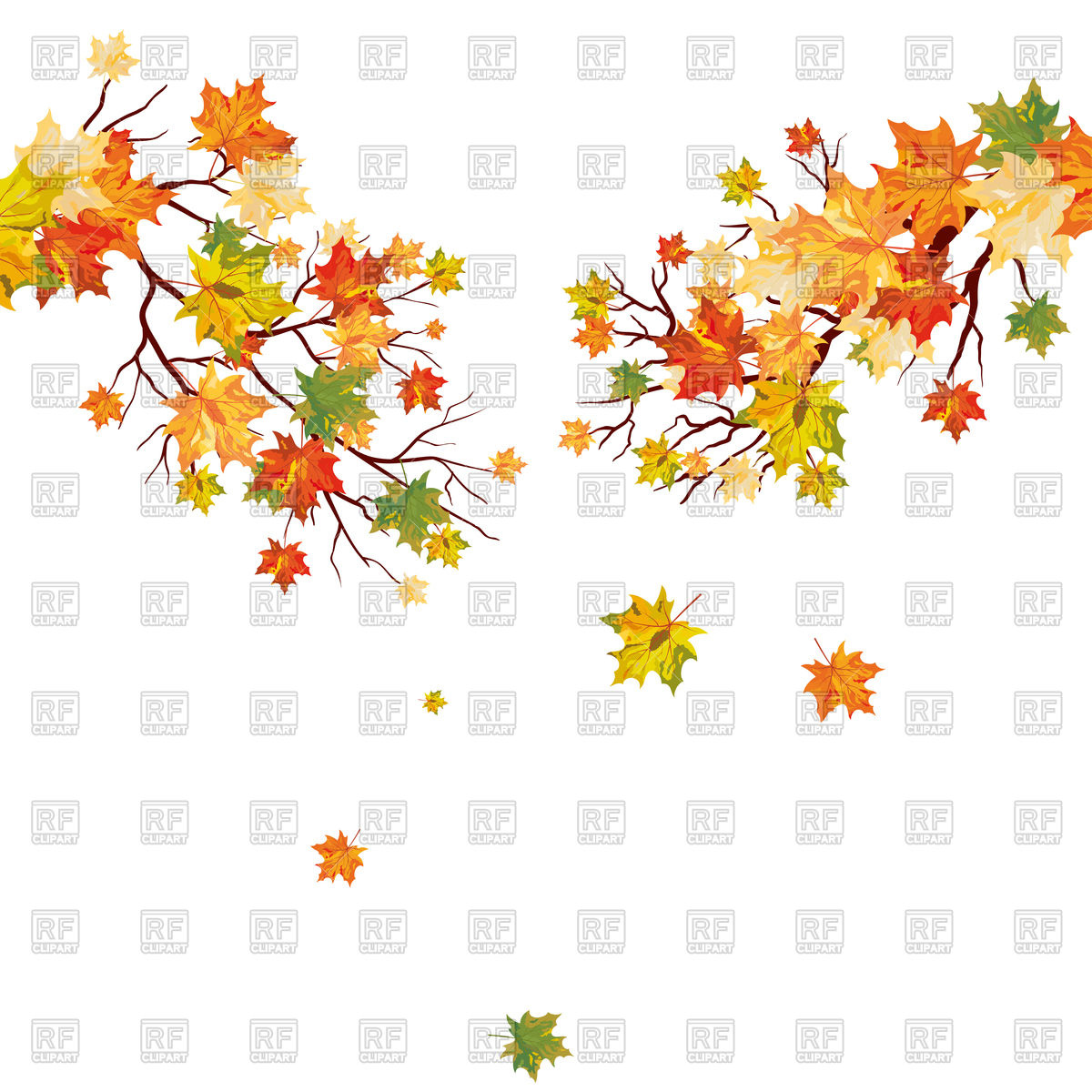 1200x1200 Autumn Maple Tree Branch With Falling Leaves Vector Image Vector