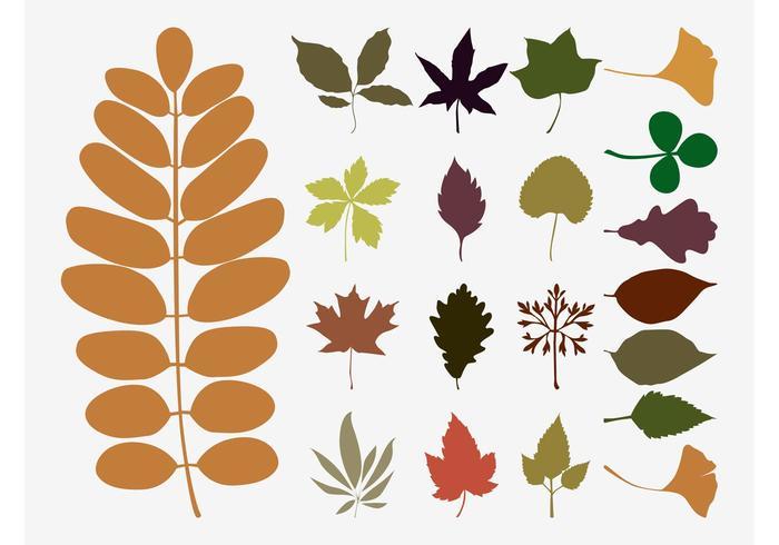 700x490 Fall Leaves Vectors