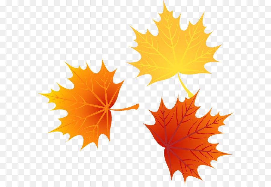 900x620 Leaf Autumn Leaves Euclidean Vector