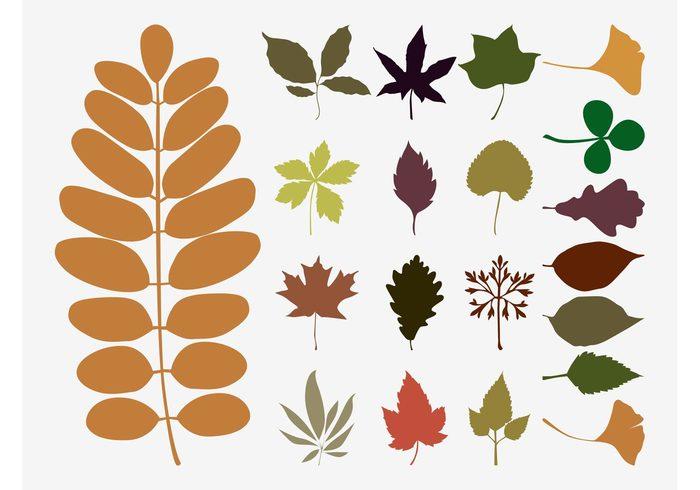 700x490 Fall Leaves Vectors 117513