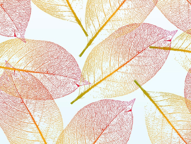646x486 Pretty Autumn Transparent Leaves Fall Vector Stock Images