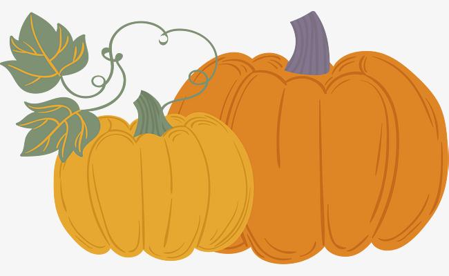 650x400 Pumpkins Mature In The Fall, Vector Png, Pumpkin, Ripe Pumpkin Png