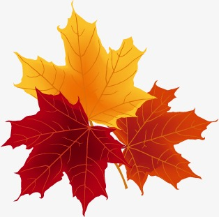 314x311 Red Leaves, Fall, Vector Png And Vector For Free Download