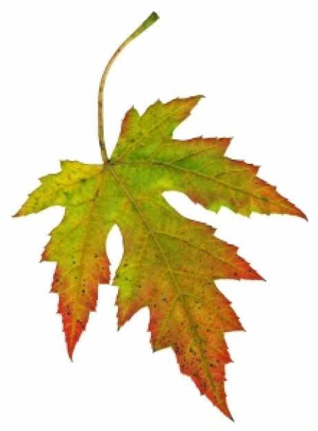 Fall Vector Free