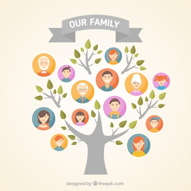 626x626 Family Tree Vectors, Photos And Psd Files Free Download
