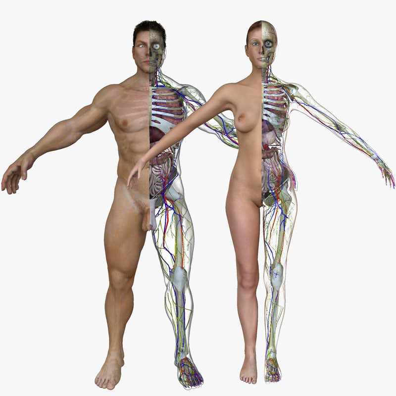 800x800 Male Female Body Anatomy On Female Human Anatomy External Organs