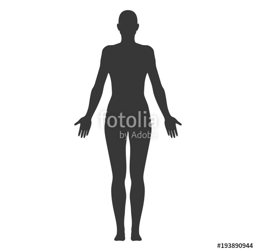 500x489 Anatomical Position Anterior View Female Body Shape Vector