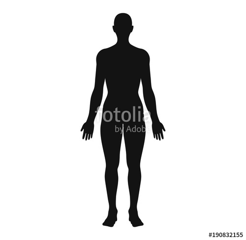 500x489 Anatomical Position Anterior View Female Body Silhouette Vector