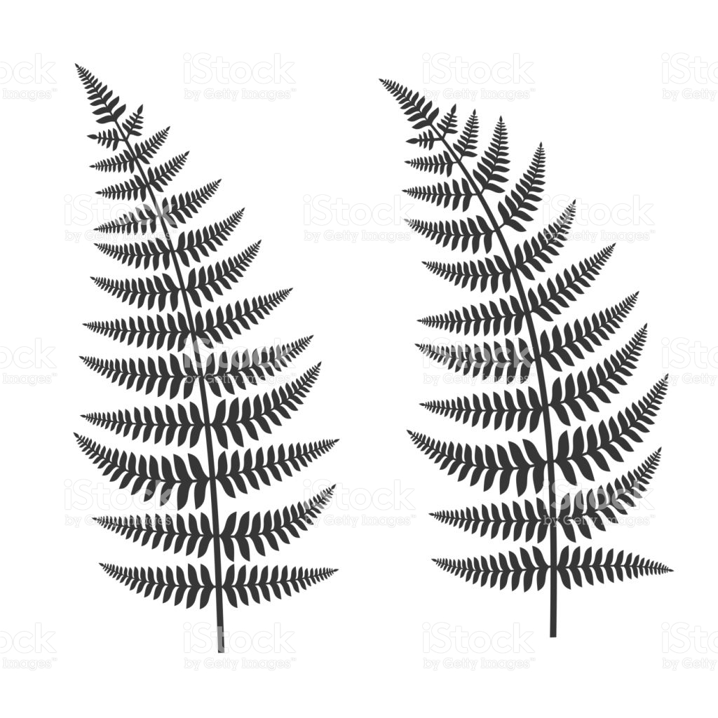 1024x1024 Collection Of Fern Leaf Drawing High Quality, Free Cliparts