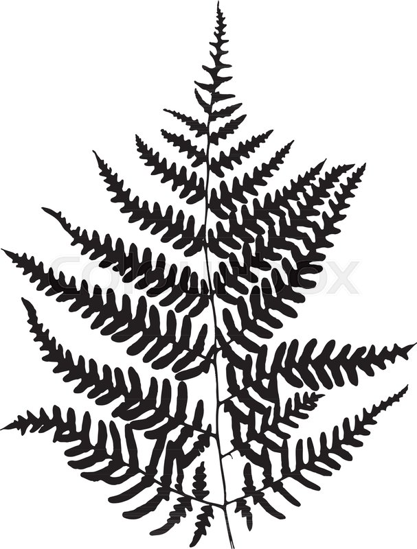 607x800 Fern Leaf Silhouette. Vector Illustration Stock Vector Colourbox