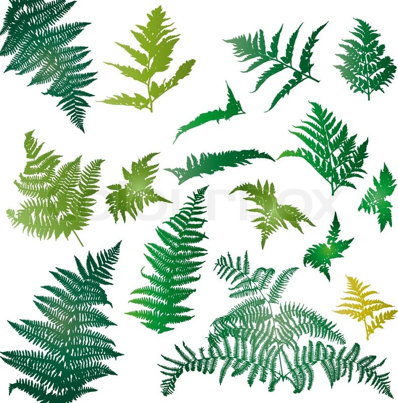 790x800 Fern Leaves Illustrated In A Set Of Design Elements Stock Vector