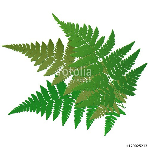 500x500 Fern Leaves. Vector. Stock Image And Royalty Free Vector Files On