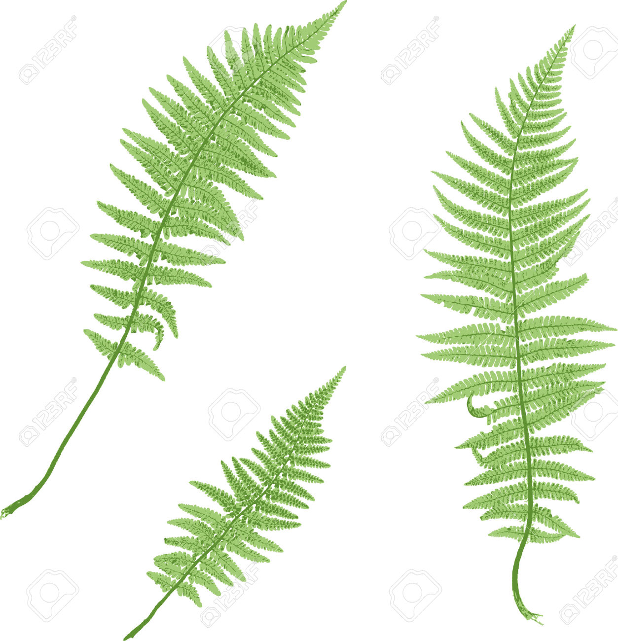 1253x1300 Foliage Clipart Fern Leaf Free Collection Download And Share