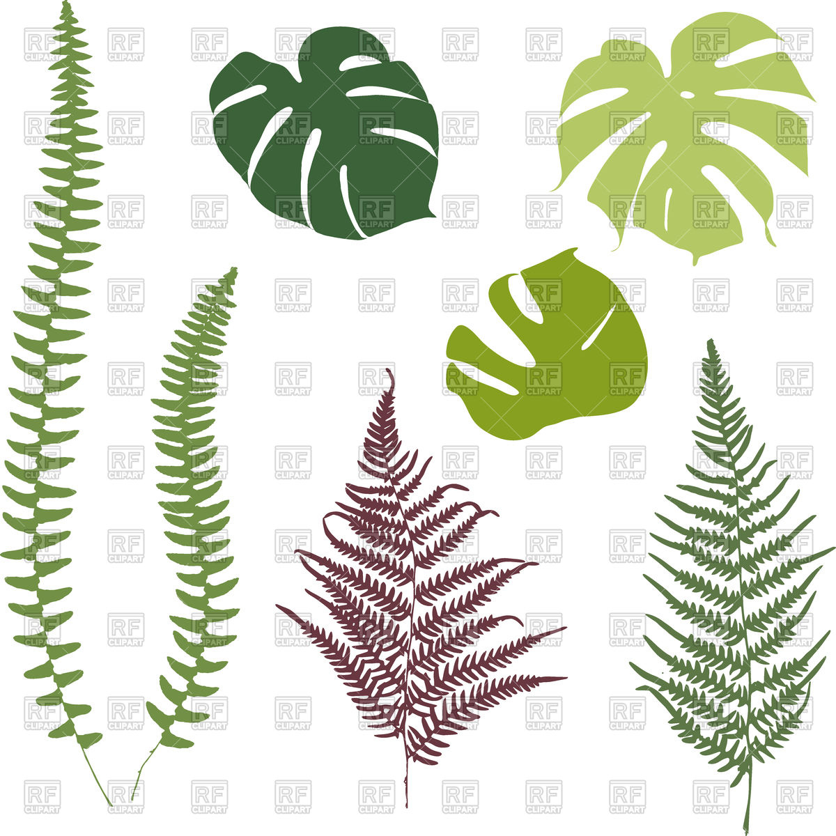 1200x1200 Silhouettes Of Fern And Monsters Leaves Vector Image Vector