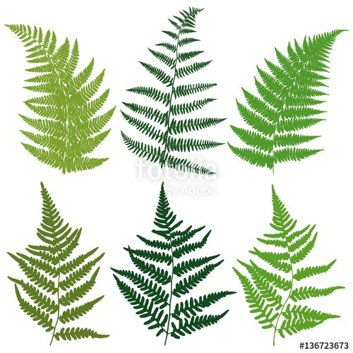 500x500 A Set Of Silhouettes Fern Leaves. Vector. Stock Image And Royalty