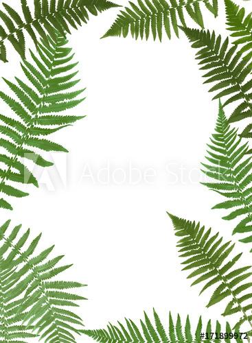 367x500 Fern Leaf Vector Background Illustration