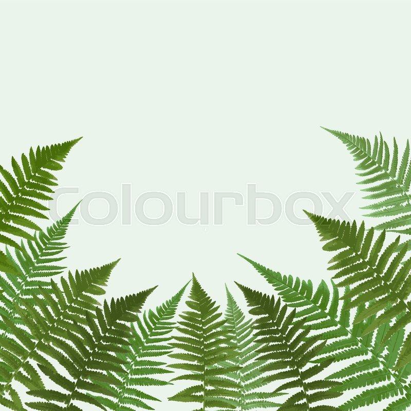 800x800 Fern Leaf Vector Background Illustration Eps10 Stock Vector