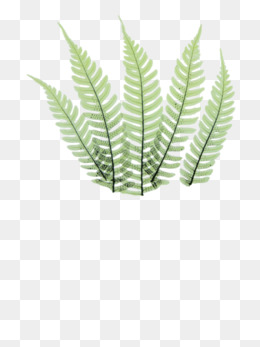 260x347 Fern Png, Vectors, Psd, And Clipart For Free Download Pngtree