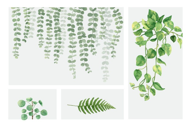 626x416 Fern Vectors, Photos And Psd Files Free Download