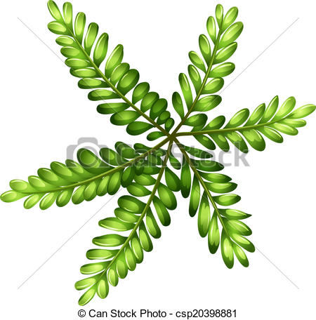 450x456 A Topview Of A Fern. Illustration Of A Topview Of A Fern On A