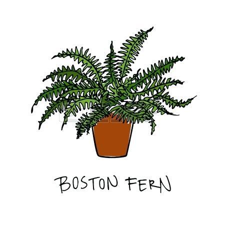 450x450 Air Fern Vector Illustration Of Hand Drawn Fern In A Pot Beautiful