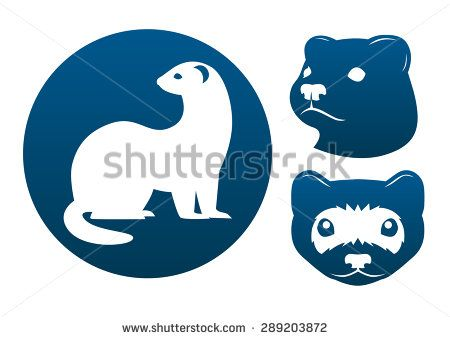 450x339 Ferret Blue Vector Signs On The White Background.