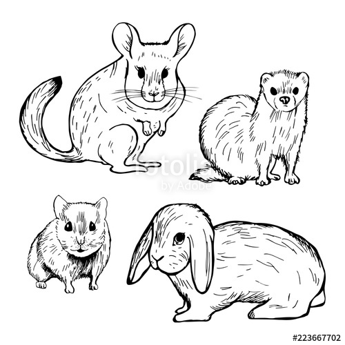 500x500 Hand Drawn Pet Rodents. Rabbit, Hamster, Chinchilla And Ferret