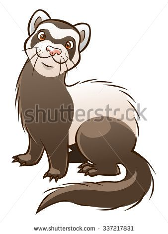 338x470 Vector Cartoon Funny Ferret Isolated On The White Background