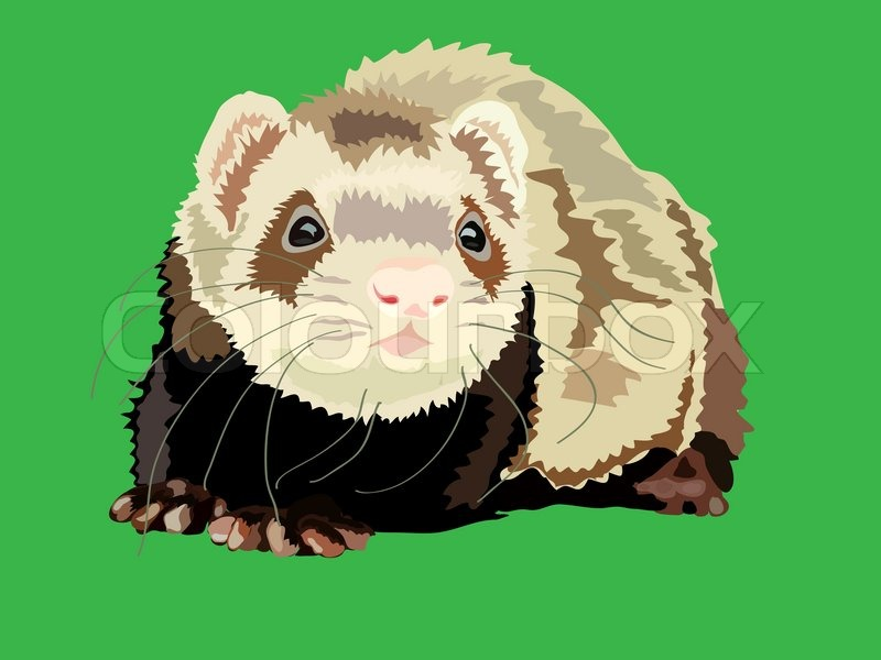 800x600 Vector Illustration Of The Ferret On The Green Background Stock
