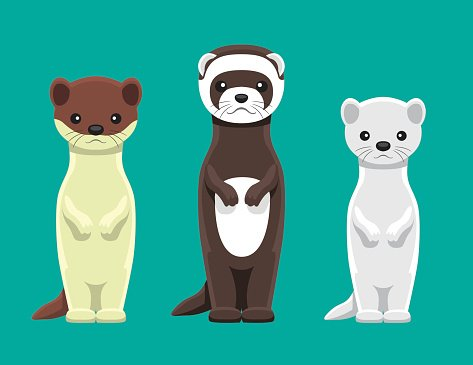473x365 Weasel Mink Ferret Doll Set Cartoon Vector Illustration Premium