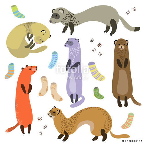 500x500 Ferret, Socks And Paw Prints Vector Illustration. Stock Image And