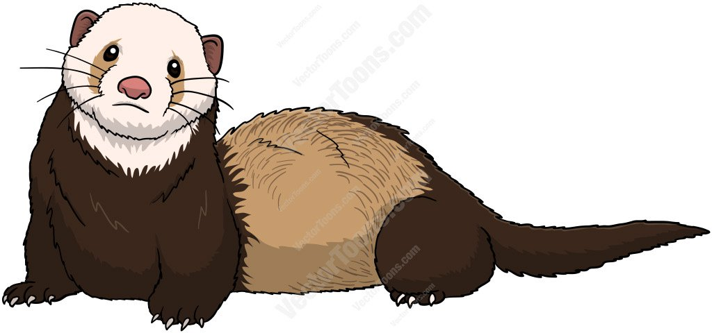 1024x480 Brown Ferret With A White Face Clipart By Vector Toons