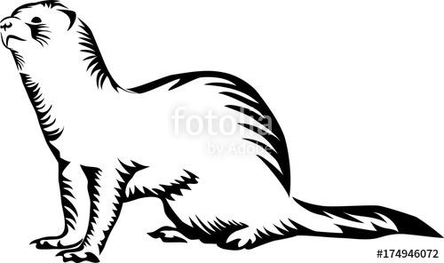 500x296 Ferret