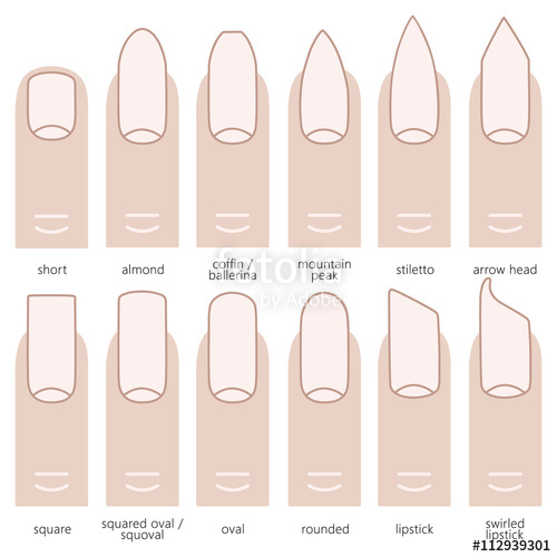 500x500 Different Nail Shapes Stock Image And Royalty Free Vector Files