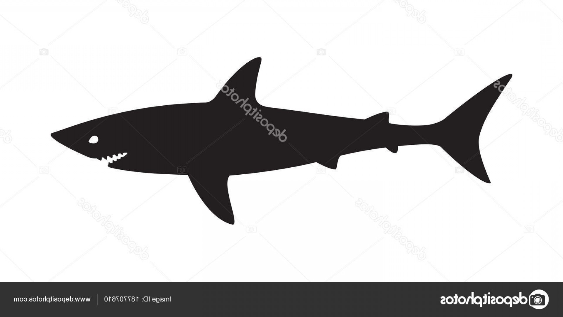 1920x1080 Stock Illustration Shark Vector Logo Fish Icon Orangiausa