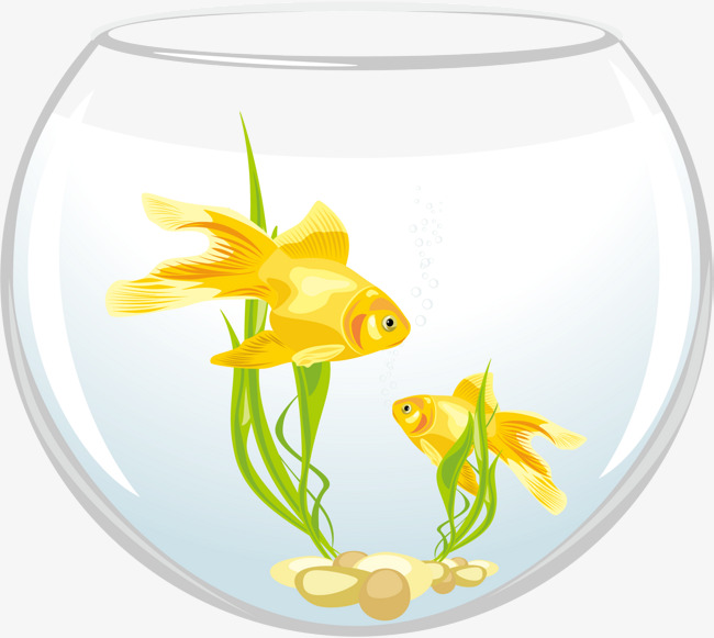 650x581 Vector Round Fish Tank, Round Vector, Fish Vector, Feed Png And